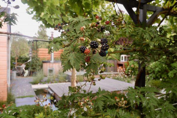 Lounge en welness tuin in Beverwijk