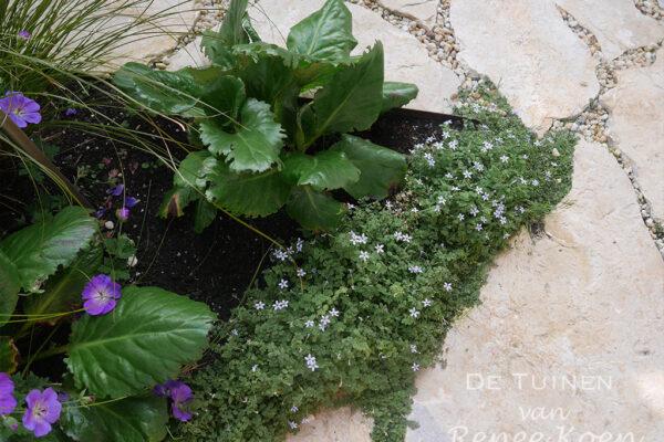 De-Tuinen-van-Renee-Koen-flagstones-met-beplanting-en-halfverharding