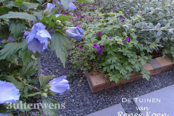 De-Tuinen-van-Renee-Koen-Hibiscus-Geranium-Anne-Thomson