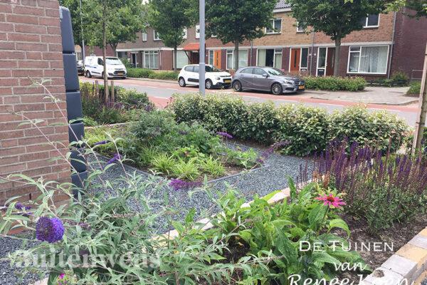 De-Tuinen-van-Renee-Koen-ontwerp-voortuin-Vlinderstruik