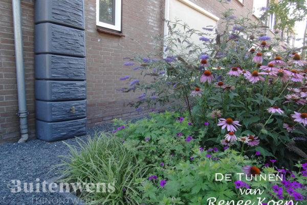 De-Tuinen-van-Renee-Koen-regenton-echinacea-purpurea-olivijn